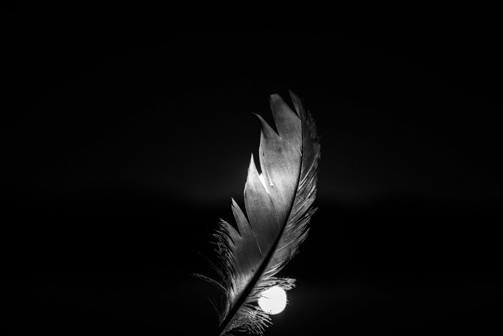 Portrait of a feather 05