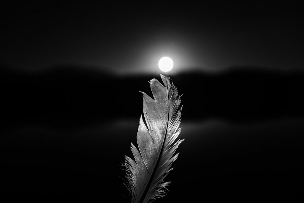 Portrait of a feather 07